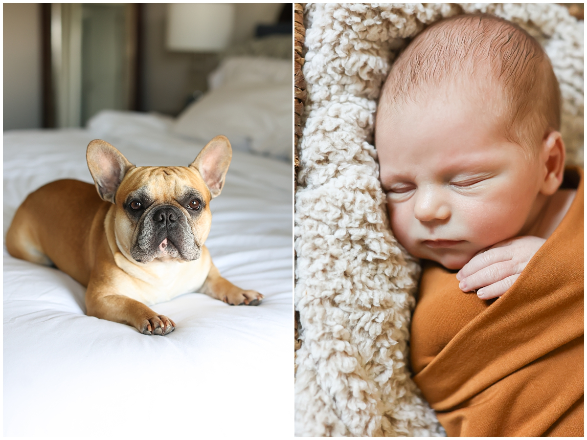 Dog in newborn photos Tampa